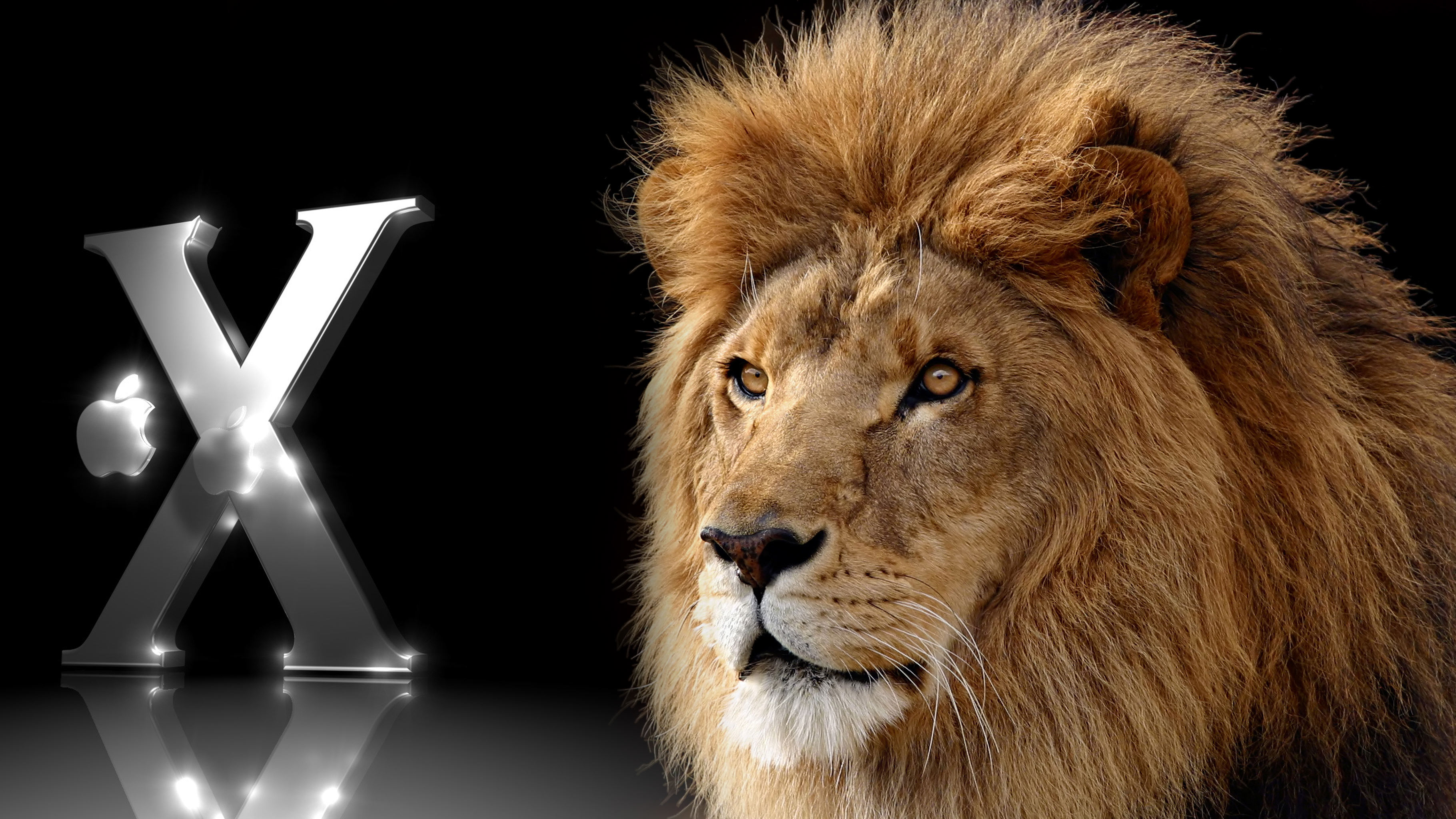 Good Wallpaper Home Screen Lion - apple-mac-os-x-lion  Best Photo Reference_36264.jpg